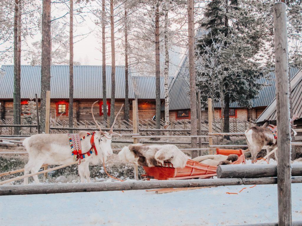 Reindeers in Santa Claus Village